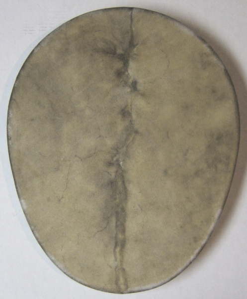Buffalo Egg-Shaped Shaman Drum with Lightning-Shaped Scar